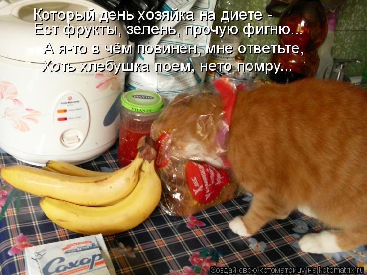 Котоматрица: Который день хозяйка на диете -  Ест фрукты, зелень, прочую фигню... А я-то в чём повинен, мне ответьте, Хоть хлебушка поем, нето помру...