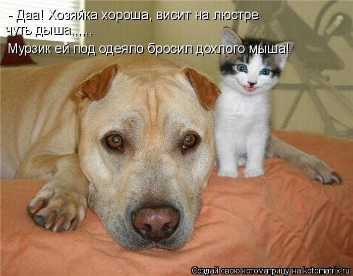 Котоматрица: - Даа! Хозяйка хороша, висит на люстре чуть дыша,,,,,, Мурзик ей под одеяло бросил дохлого мыша!