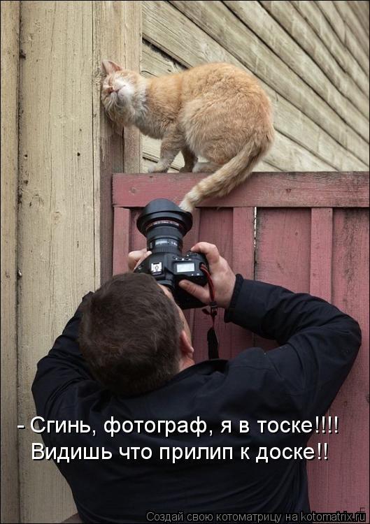 Котоматрица: - Сгинь, фотограф, я в тоске!!!! Видишь что прилип к доске!!