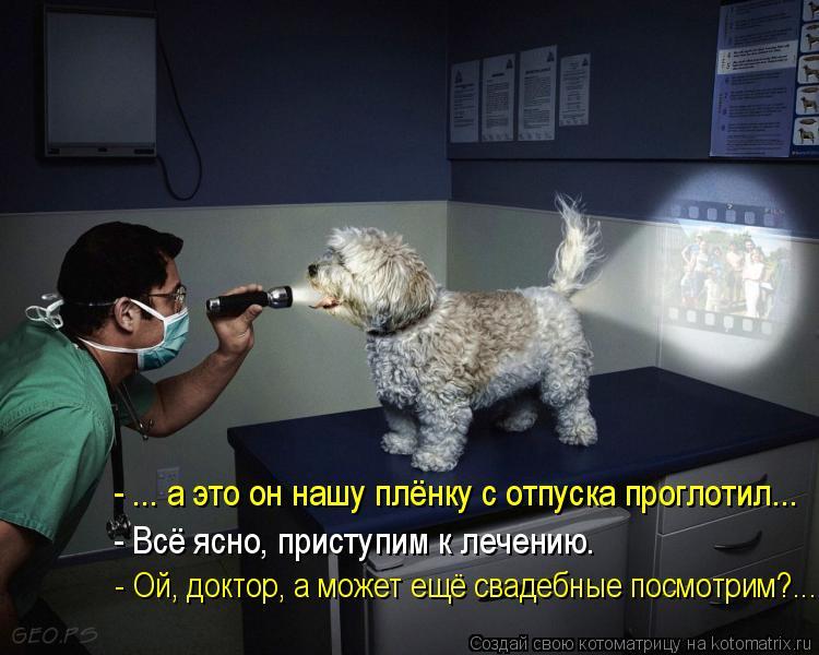Котоматрица: - ... а это он нашу плёнку с отпуска проглотил... - Всё ясно, приступим к лечению. - Ой, доктор, а может ещё свадебные посмотрим?...