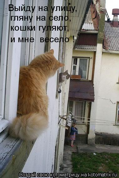 Котоматрица: Выйду на улицу,  гляну на село,  кошки гуляют,  и мне  весело !