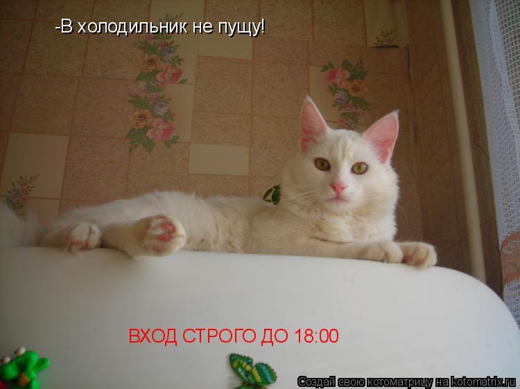Котоматрица: -В холодильник не пущу! ВХОД СТРОГО ДО 18:00
