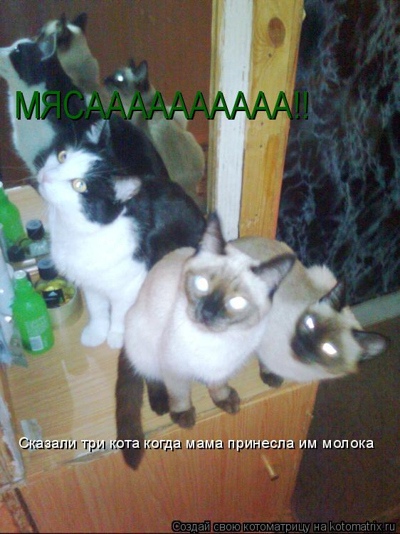 Котоматрица: МЯСАААААААААА!! Сказали три кота когда мама принесла им молока