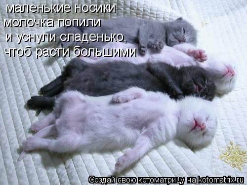 Котоматрица: маленькие носики молочка попили и уснули сладенько, чтоб расти большими