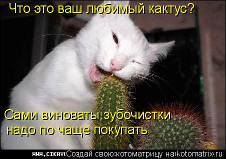 Котоматрица: Что это ваш любимый кактус? Сами виноваты зубочистки надо по чаще покупать