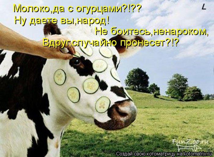 Котоматрица: Молоко,да с огурцами?!?? Ну даете вы,народ! Не боитесь,ненароком, Вдруг,случайно пронесет?!?
