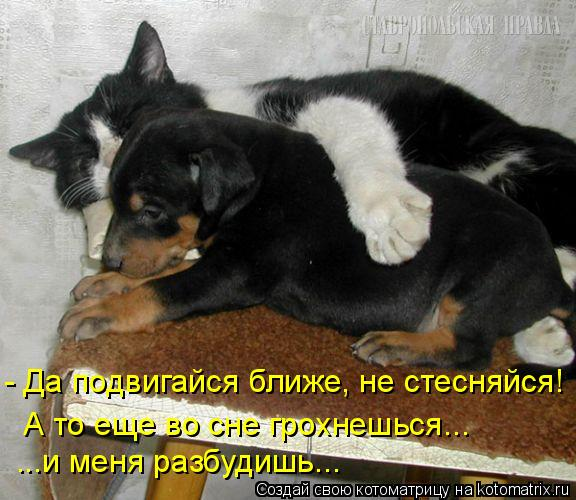 - Да подвигайся ближе, не стесняйся! А то еще во сне грохнешься... ...