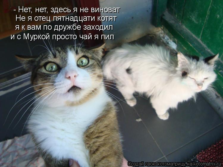 Котоматрица: - Нет, нет, здесь я не виноват Не я отец пятнадцати котят я к вам по дружбе заходил и с Муркой просто чай я пил