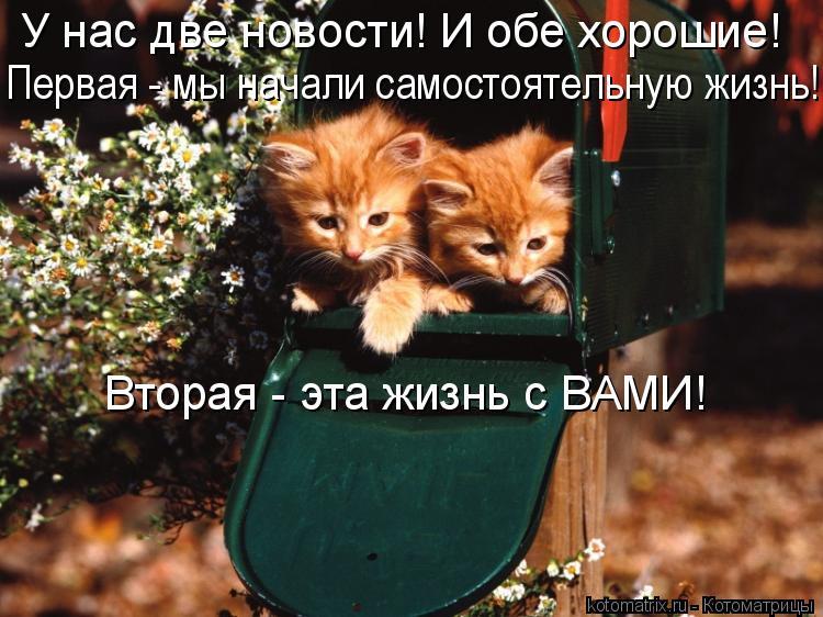 Котоматрица: У нас две новости! И обе хорошие!  Первая - мы начали самостоятельную жизнь!  Вторая - эта жизнь с ВАМИ!