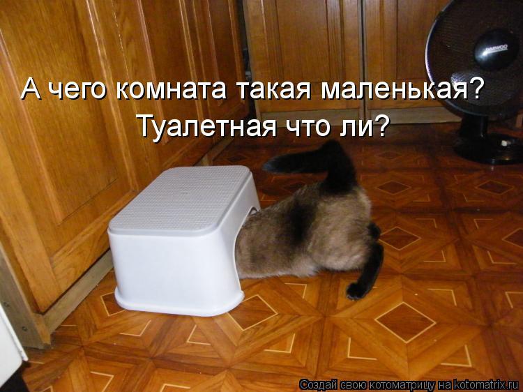 Котоматрица: А чего комната такая маленькая?  Туалетная что ли?