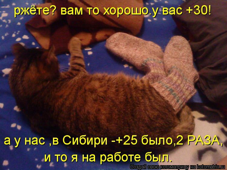 Котоматрица: ржёте? вам то хорошо.у вас +30! а у нас ,в Сибири -+25 было,2 РАЗА, и то я на работе был.