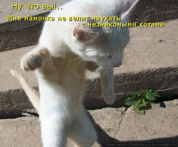 Котоматрица: Мне мамочка не велит мяукать с незнакомыми котами... Ну что вы!..