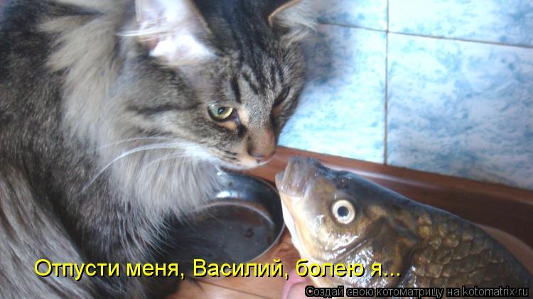 Котоматрица: Отпусти меня, Василий, болею я...