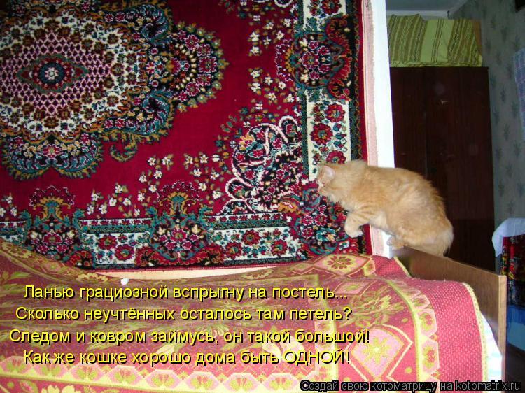 Котоматрица: Ланью грациозной вспрыгну на постель... Сколько неучтённых осталось там петель? Как же кошке хорошо дома быть ОДНОЙ! Следом и ковром займусь