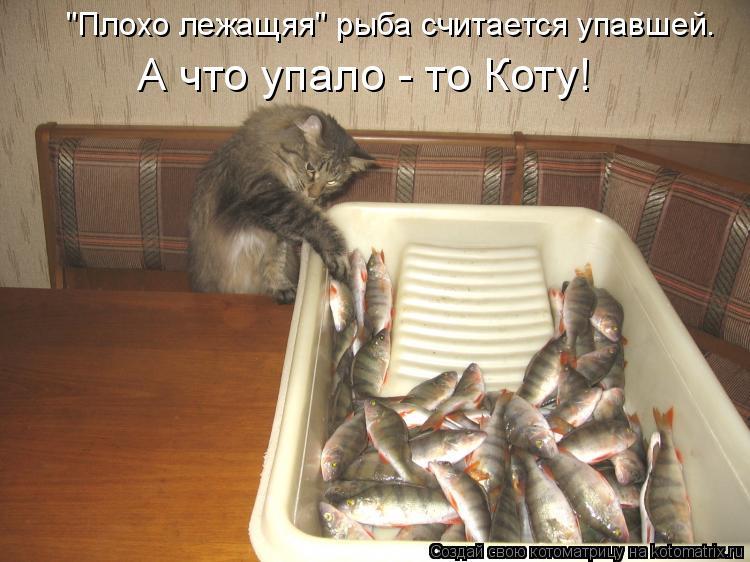 """Котоматрица: """"Плохо лежащяя"""" рыба считается упавшей. А что упало - то Коту!"""
