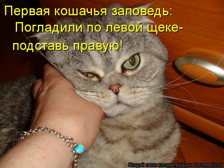 Котоматрица: Погладили по левой щеке- Первая кошачья заповедь: подставь правую!