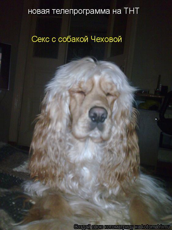 Котоматрица: новая телепрограмма на ТНТ Секс с собакой Чеховой