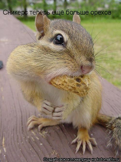 Котоматрица: Сникерс теперь ещё больше орехов