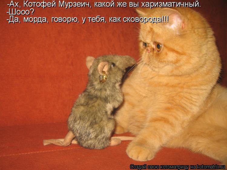 Котоматрица: -Ах, Котофей Мурзеич, какой же вы харизматичный. -Шооо? -Да, морда, говорю, у тебя, как сковорода!!!