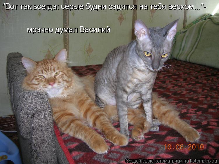 """Котоматрица: """"Вот так всегда: серые будни садятся на тебя верхом...""""- мрачно думал Василий"""