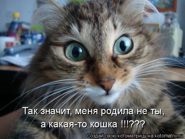 Котоматрица: Так значит, меня родила не ты, а какая-то кошка !!!???