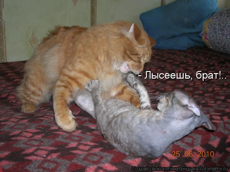 Котоматрица: - Лысеешь, брат!..