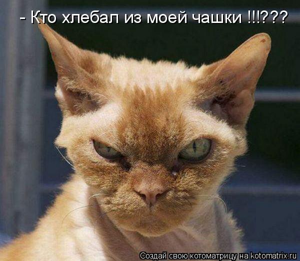 Котоматрица: - Кто хлебал из моей чашки !!!???