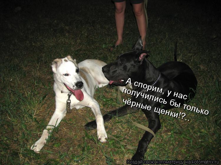 Котоматрица: - А спорим, у нас  получились бы только чёрные щенки!?..