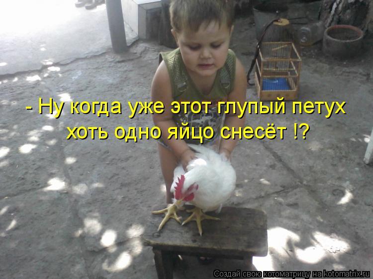 Котоматрица: - Ну когда уже этот глупый петух хоть одно яйцо снесёт !?