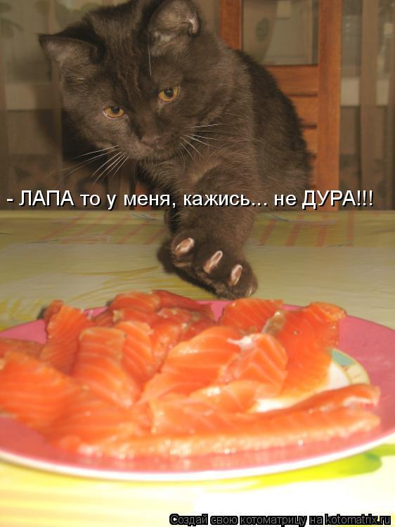 - ЛАПА то у меня, кажись... не ДУРА!!!