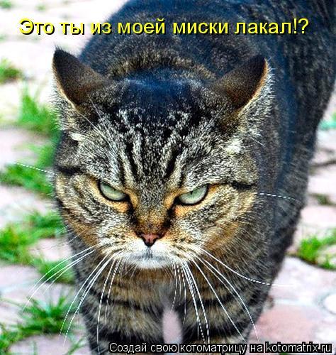 Котоматрица: Это ты из моей миски лакал!?