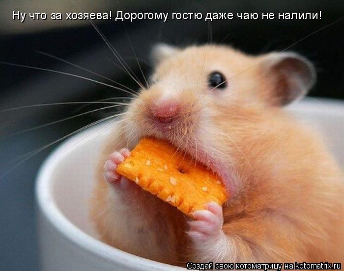 Котоматрица: Ну что за хозяева! Дорогому гостю даже чаю не налили!