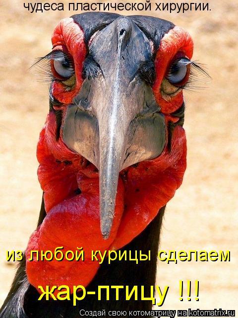 чудеса пластической хирургии. из любой курицы сделаем жар-птицу !!!