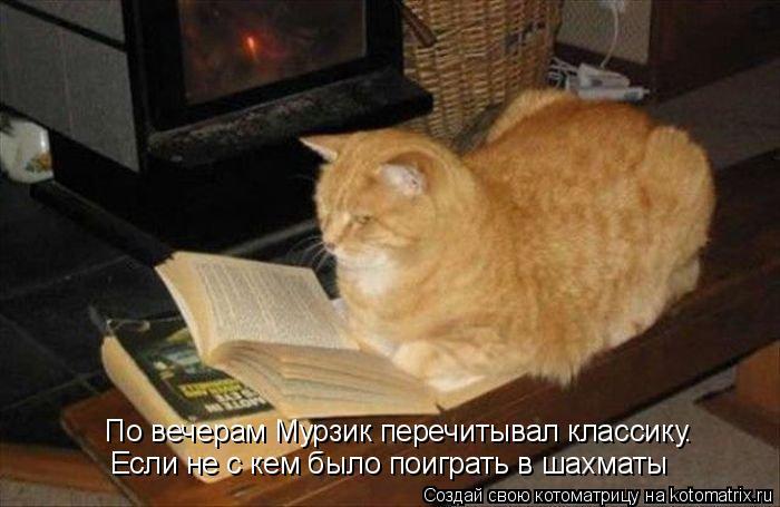 Котоматрица: По вечерам Мурзик перечитывал классику. Если не с кем было поиграть в шахматы