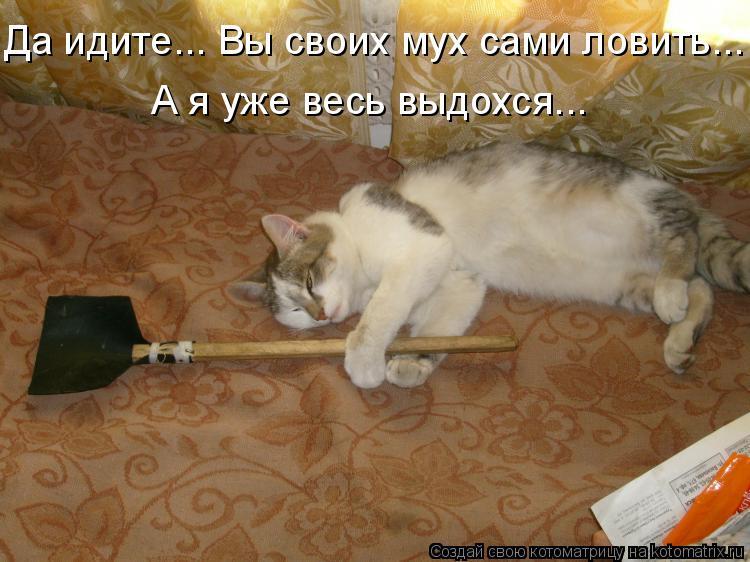 Котоматрица: Да идите... Вы своих мух сами ловить... А я уже весь выдохся...