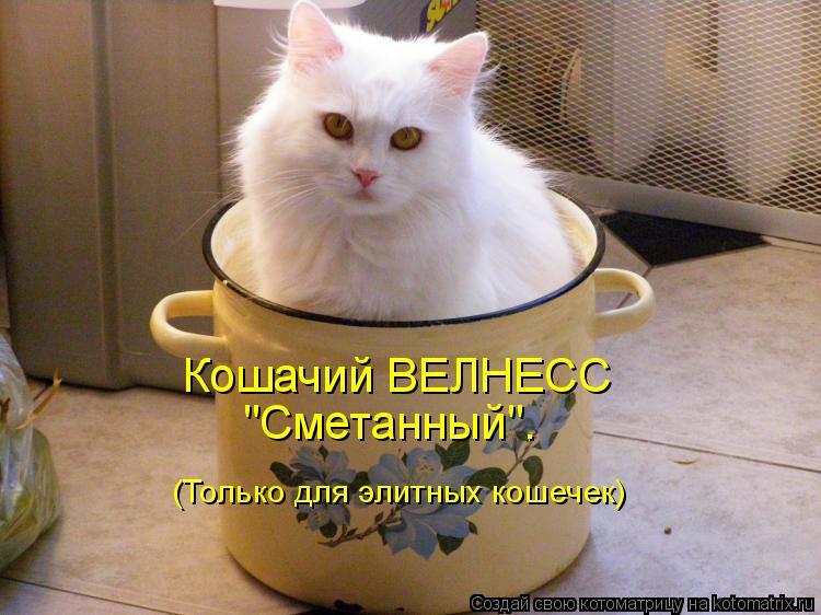 """Котоматрица: Кошачий ВЕЛНЕСС """"Сметанный"""". (Только для элитных кошечек)"""