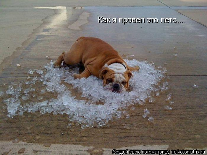Котоматрица: Как я провел это лето....
