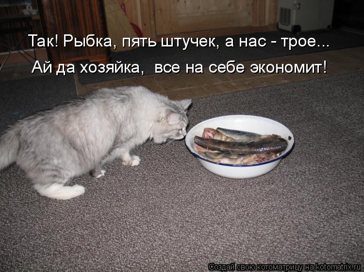 Котоматрица: Ай да хозяйка,  все на себе экономит! Так! Рыбка, пять штучек, а нас - трое...