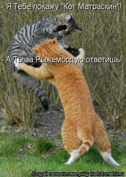 """Котоматрица: - А Ты за Рыжемордую ответишь! - Я Тебе покажу """"Кот Матраскин""""!"""