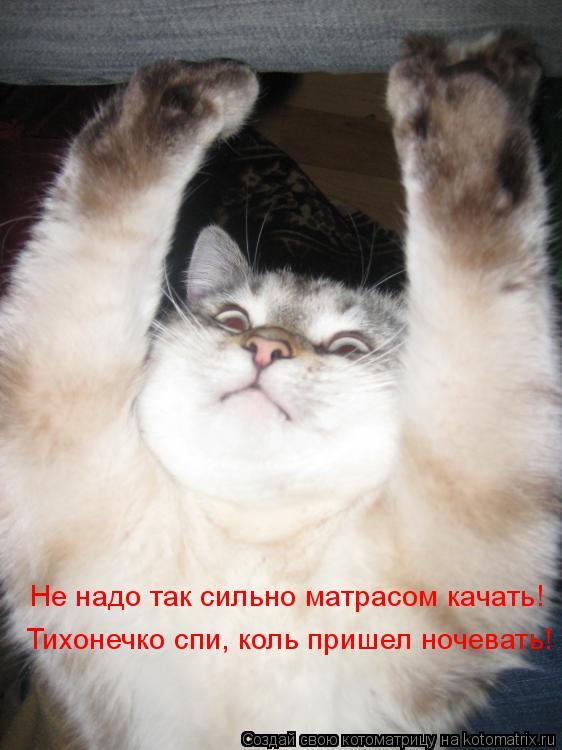 Котоматрица: Не надо так сильно матрасом качать! Тихонечко спи, коль пришел ночевать!