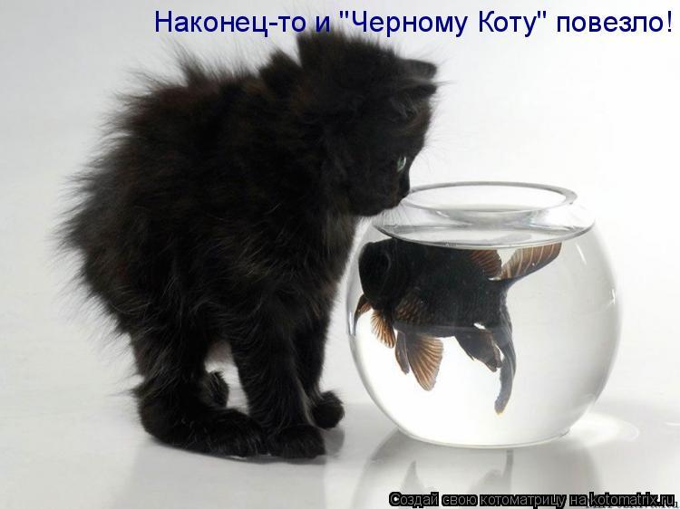 "Котоматрица: Наконец-то и ""Черному Коту"" повезло!"