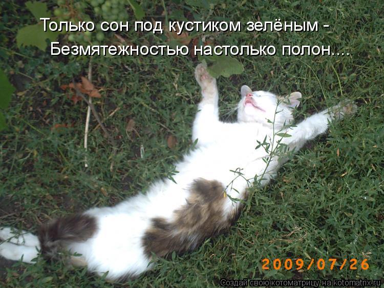 Котоматрица: Безмятежностью настолько полон.... Только сон под кустиком зелёным -