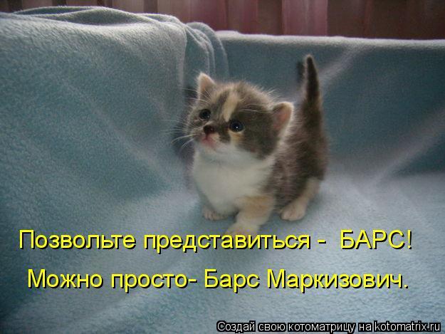 Котоматрица: Позвольте представиться -  БАРС! Можно просто- Барс Маркизович.