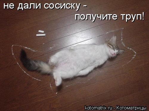 Котоматрица: не дали сосиску -  получите труп!