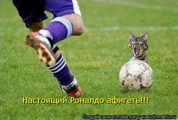 Котоматрица: Настоящий Роналдо афигеть!!!