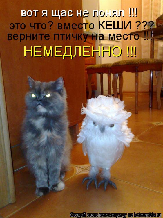 Котоматрица: вот я щас не понял !!! это что? вместо КЕШИ ??? верните птичку на место !!! НЕМЕДЛЕННО !!!