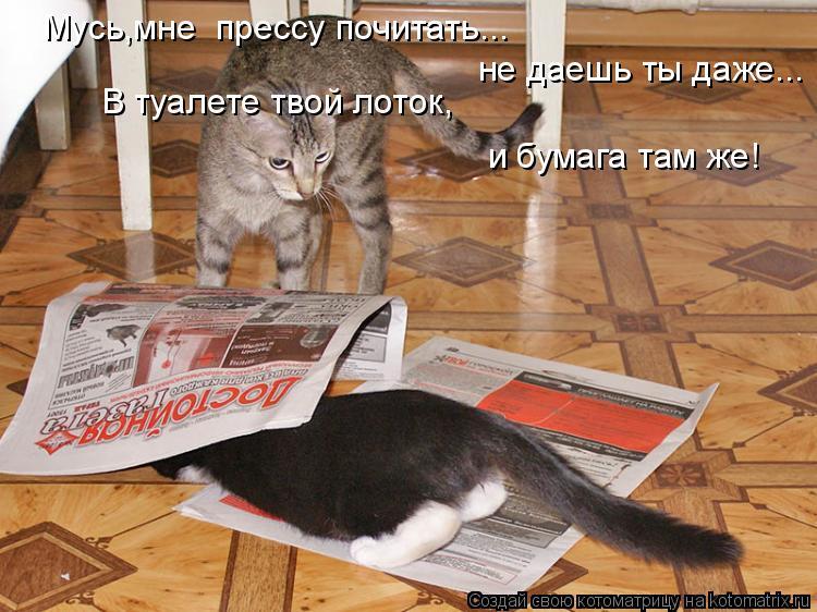 Котоматрица: Мусь,мне  прессу почитать... не даешь ты даже... В туалете твой лоток, и бумага там же!