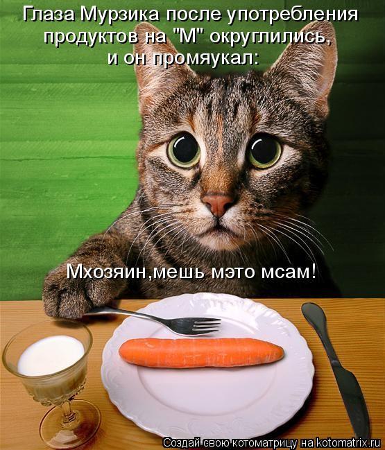 """Котоматрица: Глаза Мурзика после употребления продуктов на """"М"""" округлились, и он промяукал: Мхозяин,мешь мэто мсам!"""