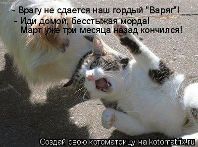 """Котоматрица: - Врагу не сдается наш гордый """"Варяг""""! - Иди домой, бесстыжая морда! Март уже три месяца назад кончился!"""