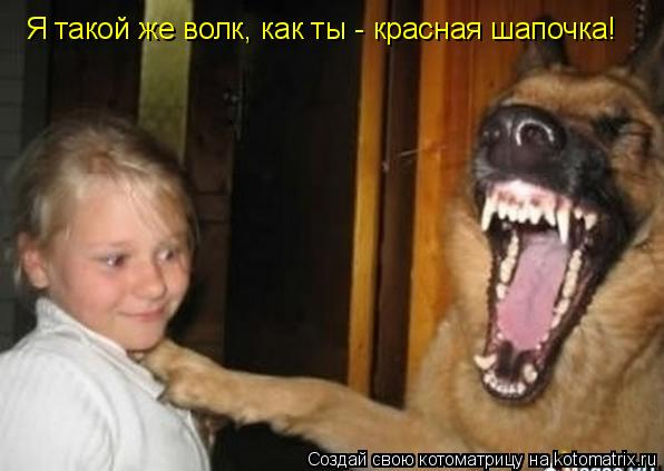 Котоматрица: Я такой же волк, как ты - красная шапочка!